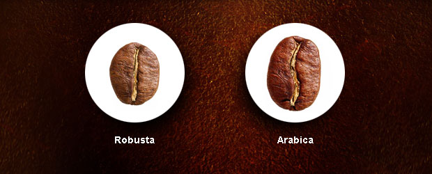 Rozdílnost kávových zrnek