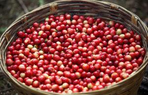 Kávové třešinky